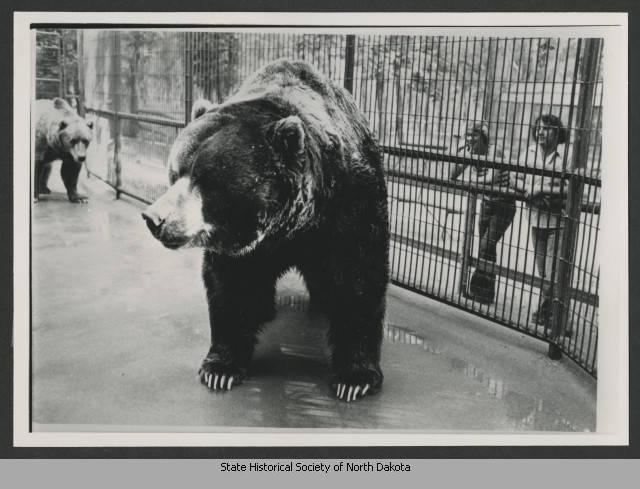 Clyde The Bear at Dakota Zoo